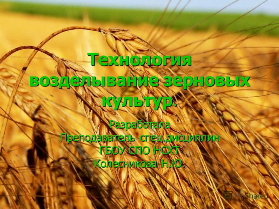 Технология возделывание зерновых культур. Разработала Преподаватель спец.дисциплин ГБОУ СПО НСХТ Колесникова Н.Ю.