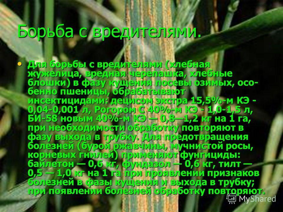 Борьба с вредителями. Для борьбы с вредителями (хлебная жужелица, вредная черепашка, хлебные блошки) в фазу кущения посевы озимых, осо бенно пшеницы, обрабатывают инсектицидами: децисом экстра 15,5%-м КЭ - 0,04-0,001 л, Рогором С 40%-м КЭ - 1,0-1,5