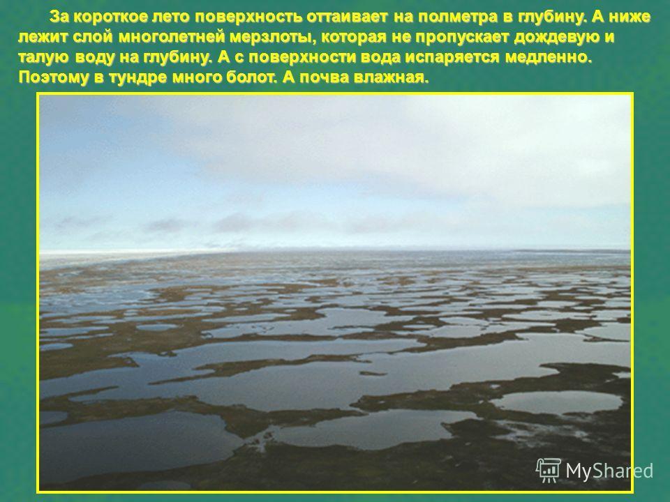 За короткое лето поверхность оттаивает на полметра в глубину. А ниже лежит слой многолетней мерзлоты, которая не пропускает дождевую и талую воду на глубину. А с поверхности вода испаряется медленно. Поэтому в тундре много болот. А почва влажная.