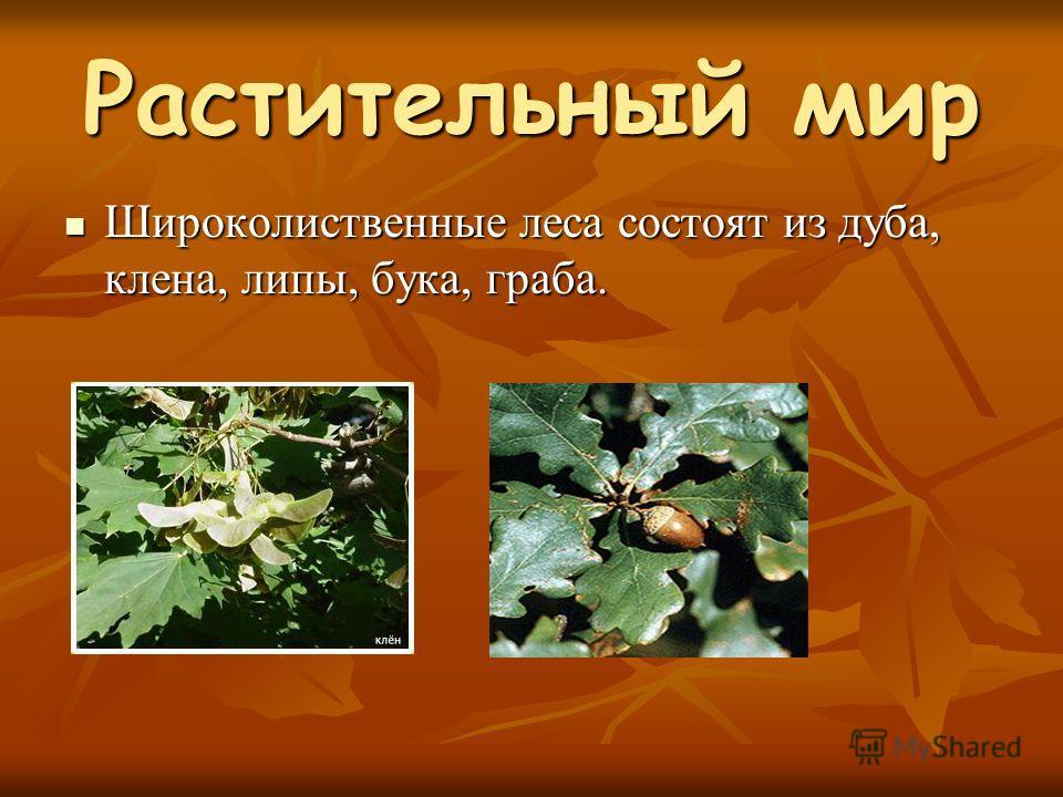 Растительный мир Широколиственные леса состоят из дуба, клена, липы, бука, граба. Широколиственные леса состоят из дуба, клена, липы, бука, граба.