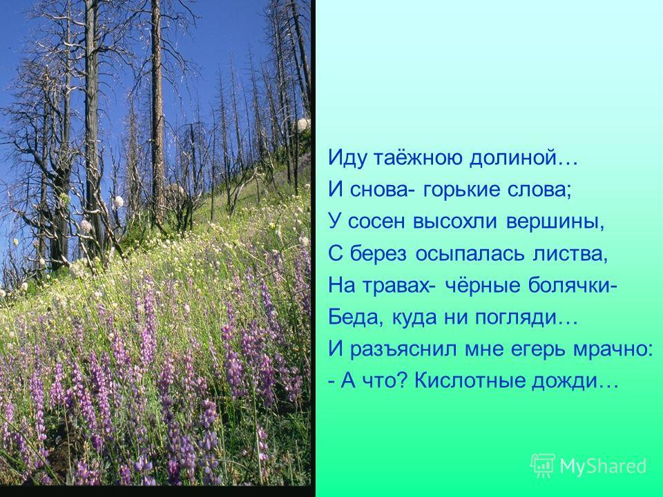 Иду таёжною долиной… И снова- горькие слова; У сосен высохли вершины, С берез осыпалась листва, На травах- чёрные болячки- Беда, куда ни погляди… И разъяснил мне егерь мрачно: - А что? Кислотные дожди…
