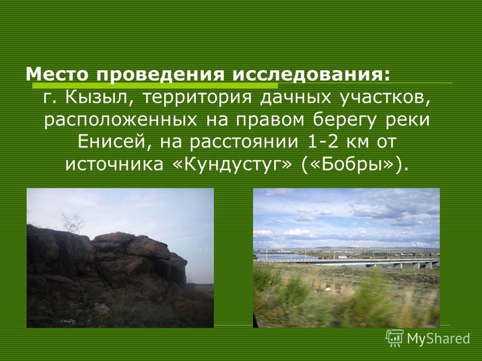 Место проведения исследования: г. Кызыл, территория дачных участков, расположенных на правом берегу реки Енисей, на расстоянии 1-2 км от источника «Кундустуг» («Бобры»).