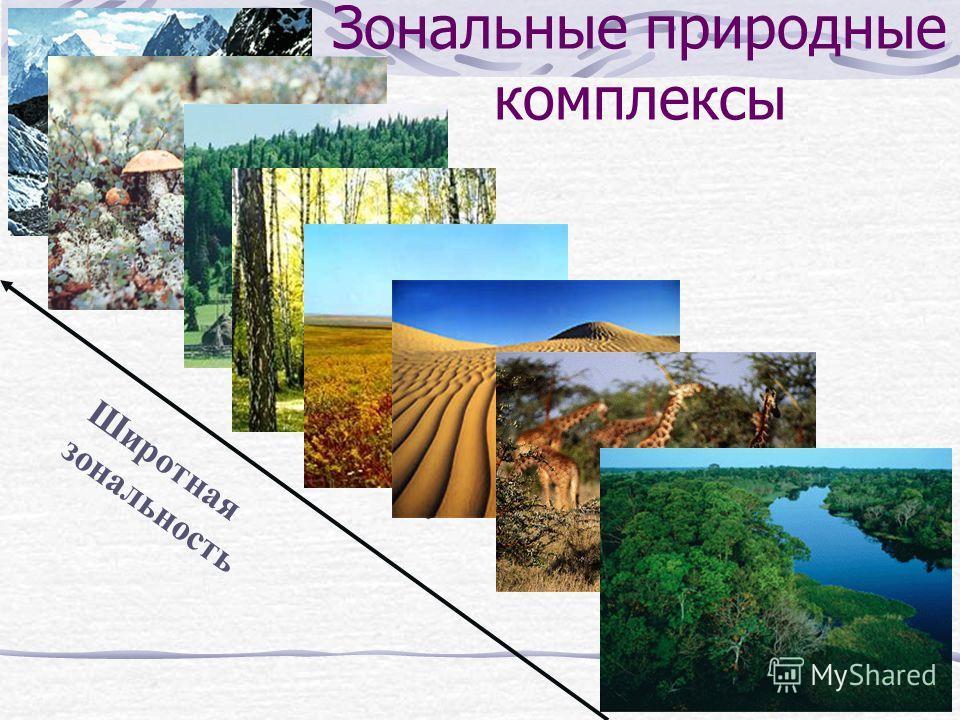 Зональные природные комплексы Арктические пустыни тундра тайга Смешанные и широ- колиственные леса степи пустыни саванна Экваториальные леса Широтная зональность