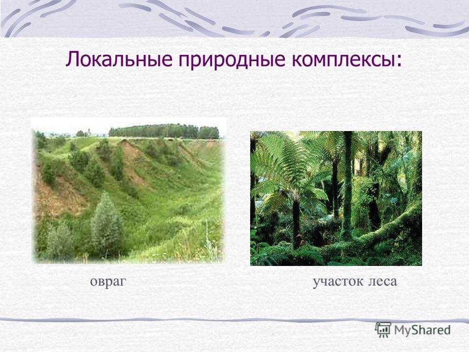 Локальные природные комплексы: оврагучасток леса