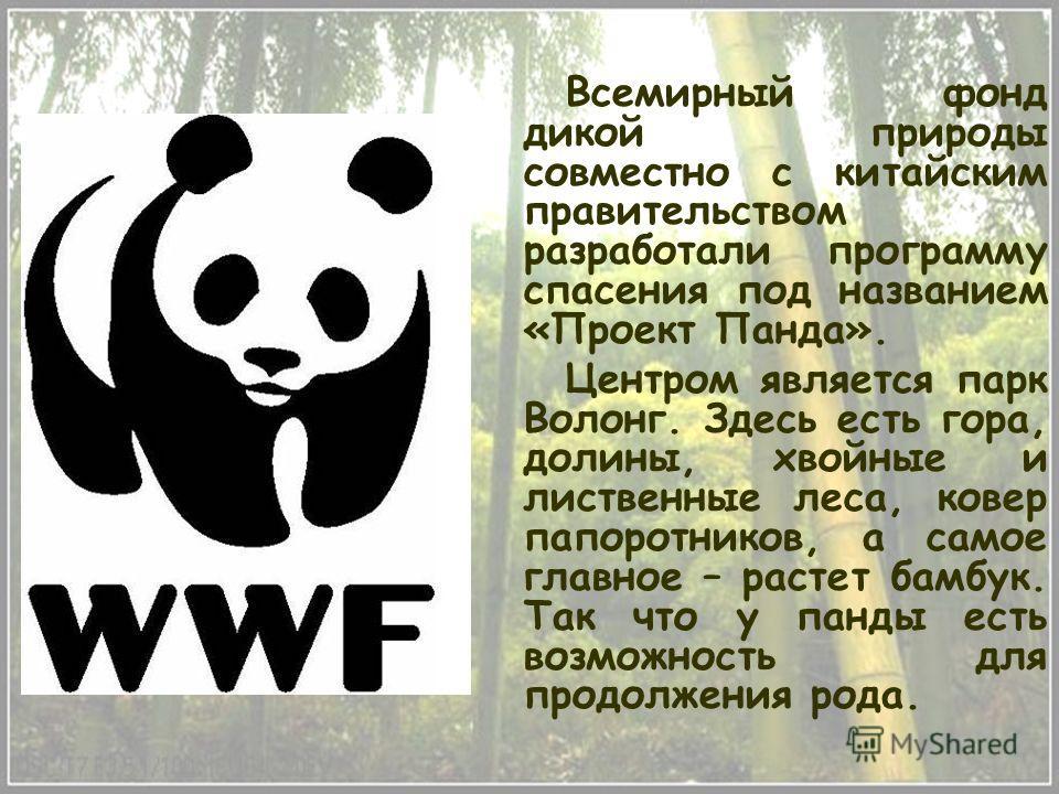 Всемирный фонд дикой природы совместно с китайским правительством разработали программу спасения под названием «Проект Панда». Центром является парк Волонг. Здесь есть гора, долины, хвойные и лиственные леса, ковер папоротников, а самое главное – рас