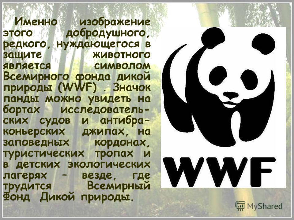 Именно изображение этого добродушного, редкого, нуждающегося в защите животного является символом Всемирного фонда дикой природы (WWF). Значок панды можно увидеть на бортах исследователь- ских судов и антибра- коньерских джипах, на заповедных кордона