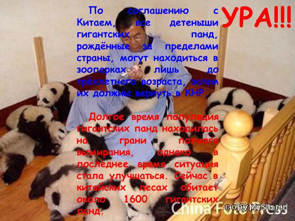По соглашению с Китаем, все детеныши гигантских панд, рождённые за пределами страны, могут находиться в зоопарках лишь до трёхлетнего возраста, затем их должны вернуть в КНР. Долгое время популяция гигантских панд находилась на грани полного вымирани