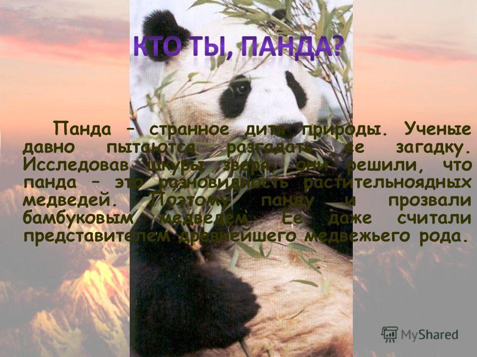 Панда – странное дитя природы. Ученые давно пытаются разгадать ее загадку. Исследовав шкуры зверя, они решили, что панда – это разновидность растительноядных медведей. Поэтому панду и прозвали бамбуковым медведем. Ее даже считали представителем древн