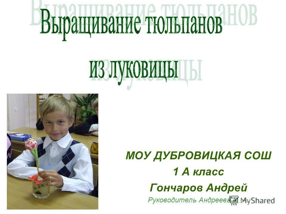 МОУ ДУБРОВИЦКАЯ СОШ 1 А класс Гончаров Андрей Руководитель Андреева И. А.