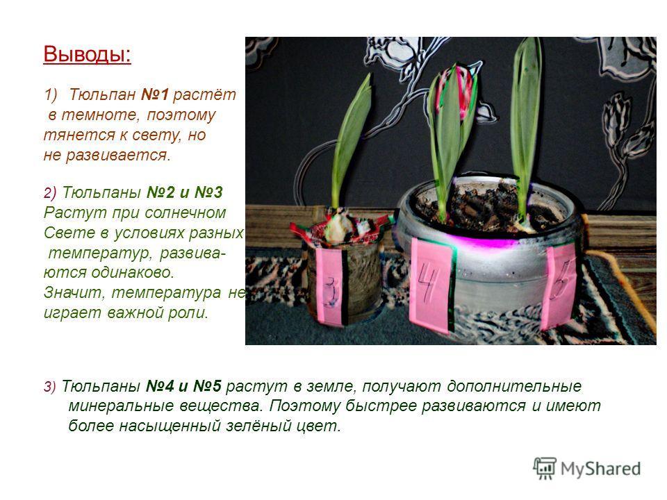 Выводы: 1)Тюльпан 1 растёт в темноте, поэтому тянется к свету, но не развивается. 2 ) Тюльпаны 2 и 3 Растут при солнечном Свете в условиях разных температур, развива- ются одинаково. Значит, температура не играет важной роли. 3) Тюльпаны 4 и 5 растут