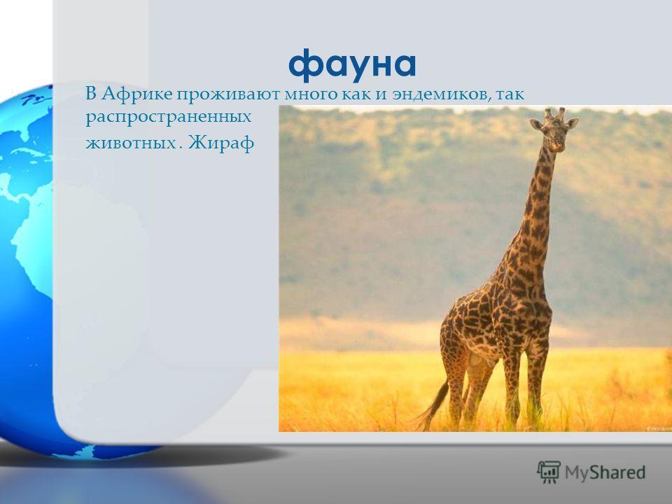фауна В Африке проживают много как и эндемиков, так распространенных животных. Жираф