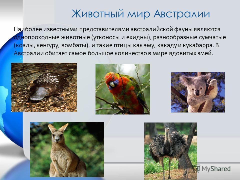 Наиболее известными представителями австралийской фауны являются однопроходные животные (утконосы и ехидны), разнообразные сумчатые (коалы, кенгуру, вомбаты), и такие птицы как эму, какаду и кукабарра. В Австралии обитает самое большое количество в м