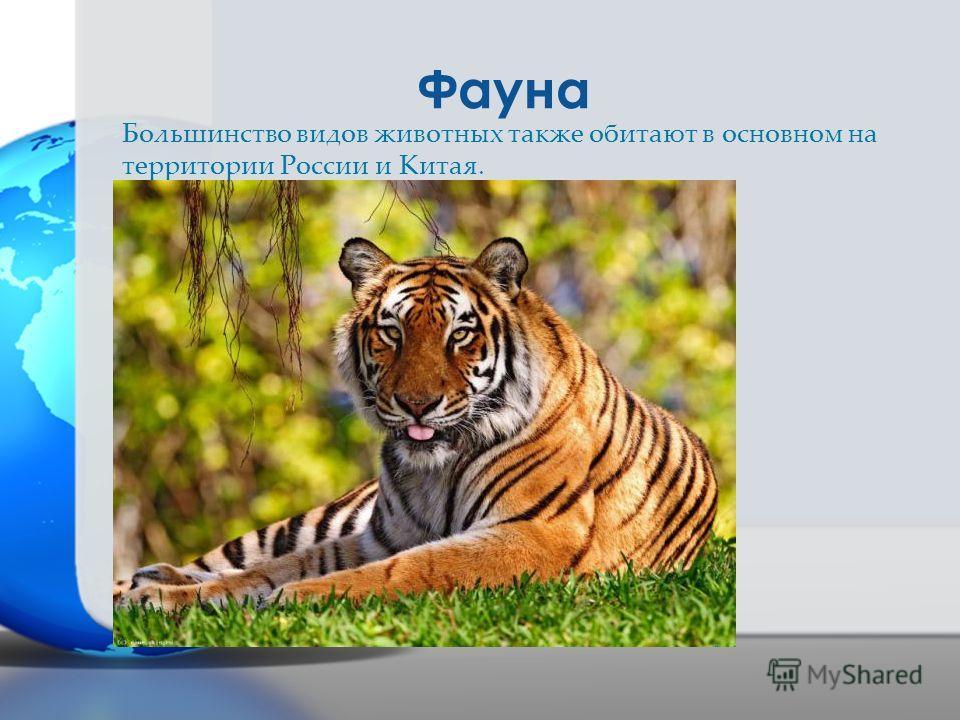 Фауна Большинство видов животных также обитают в основном на территории России и Китая.