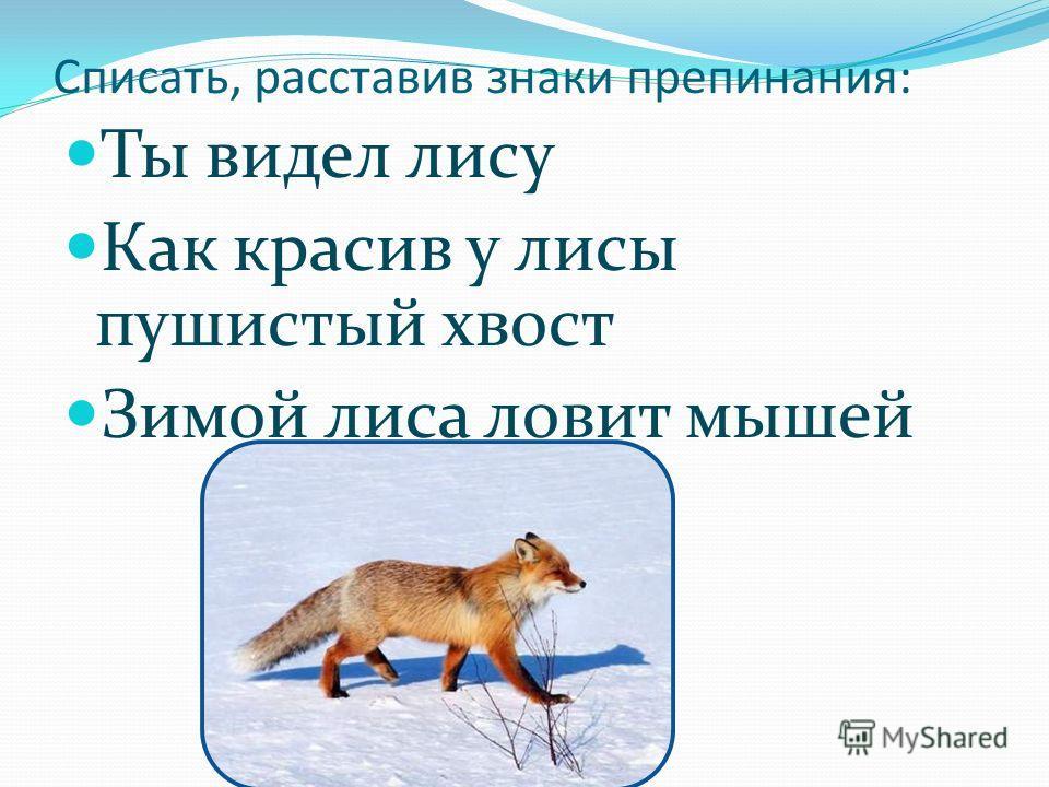 Списать, расставив знаки препинания: Ты видел лису Как красив у лисы пушистый хвост Зимой лиса ловит мышей