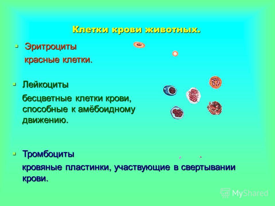 Сопоставление формы и размеров эритроцитов ряда животных Тритон Тритон Лягушка Лягушка Курица Курица Кролик Кролик Кошка Кошка Лошадь Лошадь Верблюд Верблюд У рыб, амфибий и рептилий эритроциты содержат ядра. У птиц эритроцит имеет форму эллипса и со