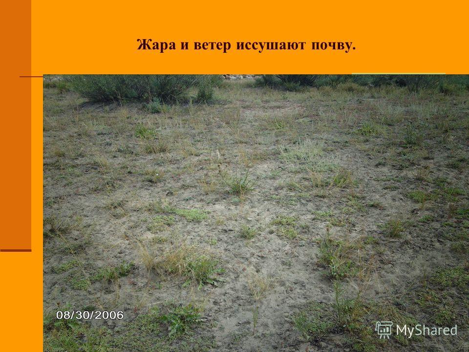 Жара и ветер иссушают почву.
