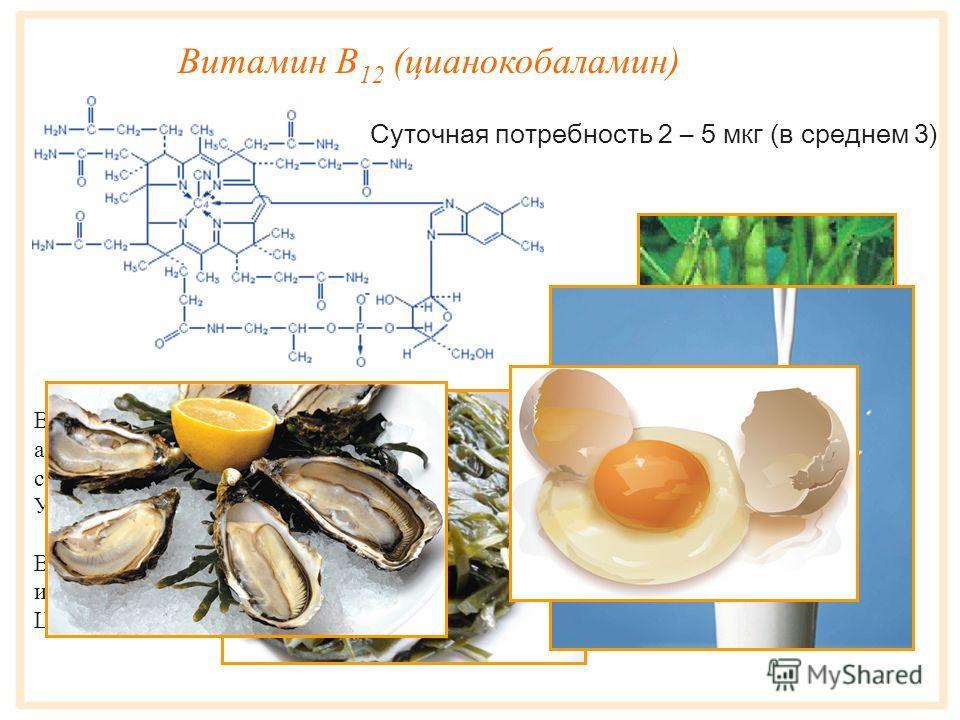 Витамин B 9 (фолиевая кислота) Витамин B 9 - водорастворимый витамин, легко разрушается при кулинарной обработке и на свету. Кроветворный фактор, переносчик одноуглеродных радикалов, участвует в синтезе аминокислот и нуклеиновых кислот. Суточная потр