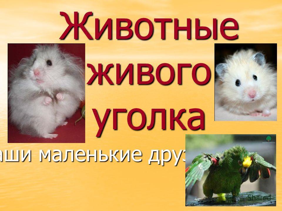 Животные живого уголка Наши маленькие друзья Наши маленькие друзья