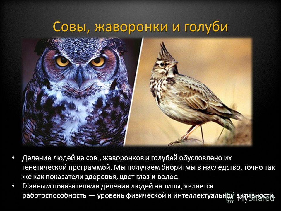 Совы, жаворонки и голуби Деление людей на сов, жаворонков и голубей обусловлено их генетической программой. Мы получаем биоритмы в наследство, точно так же как показатели здоровья, цвет глаз и волос. Главным показателями деления людей на типы, являет