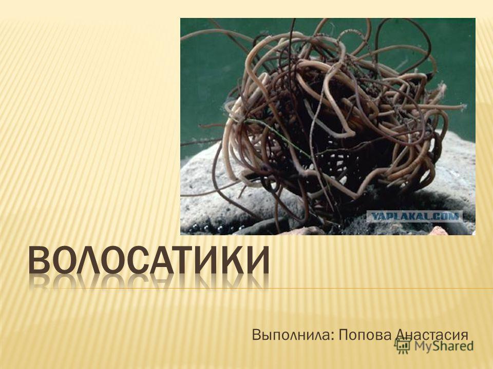Выполнила: Попова Анастасия