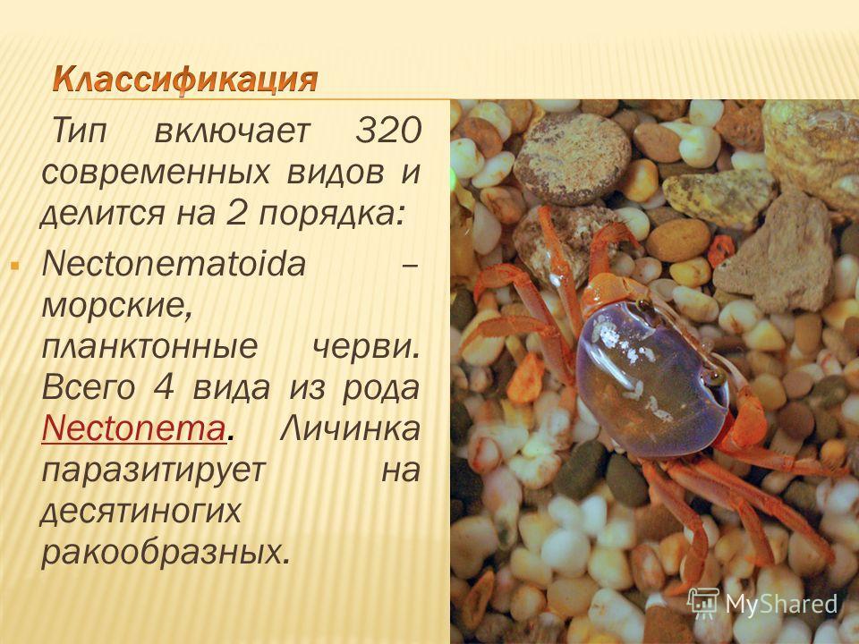 Тип включает 320 современных видов и делится на 2 порядка: Nectonematoida – морские, планктонные черви. Всего 4 вида из рода Nectonema. Личинка паразитирует на десятиногих ракообразных. Nectonema