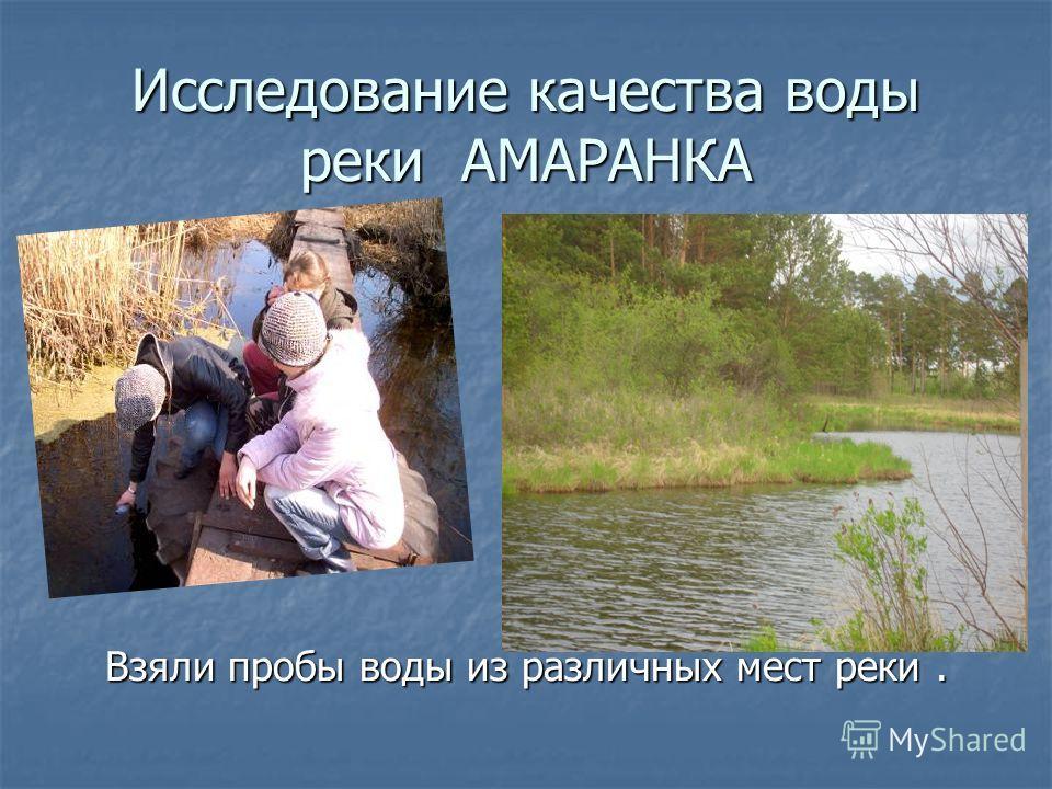 Исследование качества воды реки АМАРАНКА Взяли пробы воды из различных мест реки.