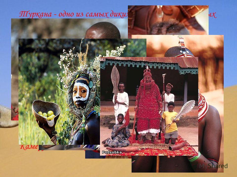 Туркана - одно из самых диких и первобытных кочевых племен Африки, проживающее в суровых пустынных условиях. Из-за нехватки воды дети племени часто пьют прямо из вымени верблюдиц, дающих молоко до пяти раз в сутки. Племя бушменов употребляет в еду «б