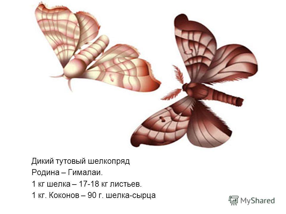 Дикий тутовый шелкопряд Родина – Гималаи. 1 кг шелка – 17-18 кг листьев. 1 кг. Коконов – 90 г. шелка-сырца