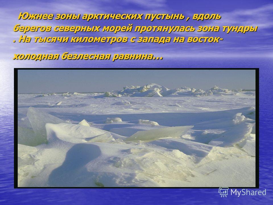 Южнее зоны арктических пустынь, вдоль берегов северных морей протянулась зона тундры. На тысячи километров с запада на восток- холодная безлесная равнина … Южнее зоны арктических пустынь, вдоль берегов северных морей протянулась зона тундры. На тысяч