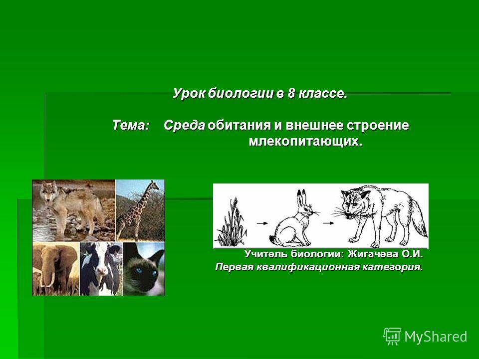 План конспект урока биологии на тему млекопитающие