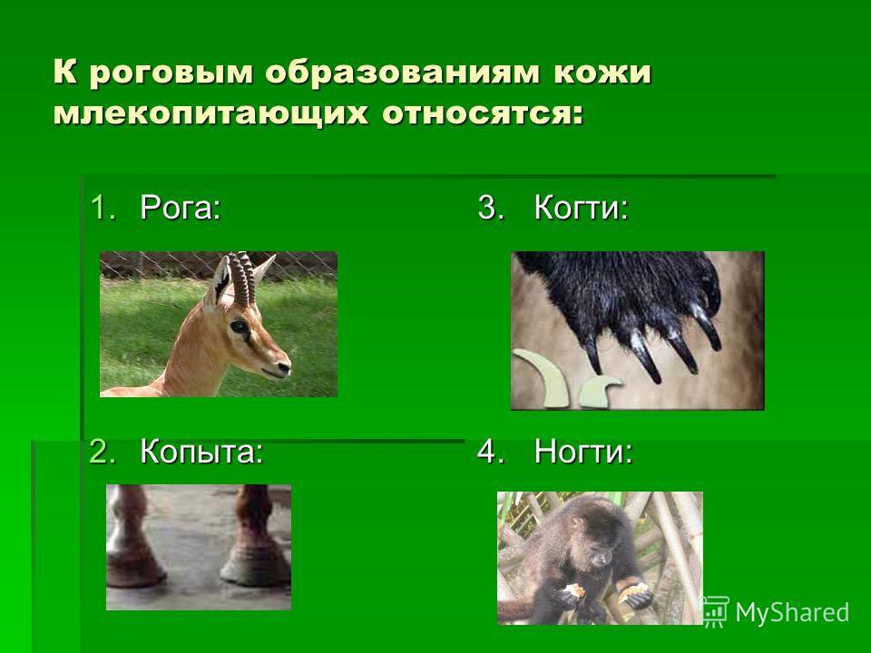 К роговым образованиям кожи млекопитающих относятся: 1.Рога: 2.Копыта: 3. Когти: 4. Ногти: