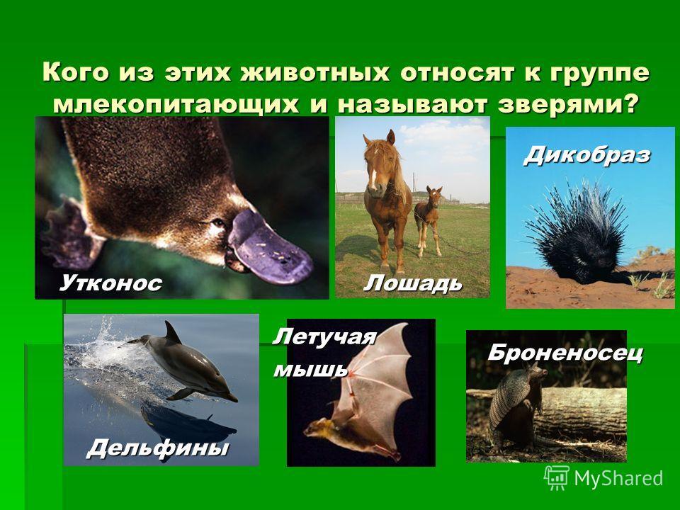 Кого из этих животных относят к группе млекопитающих и называют зверями? УтконосЛошадь Дикобраз Дельфины Летучаямышь Броненосец