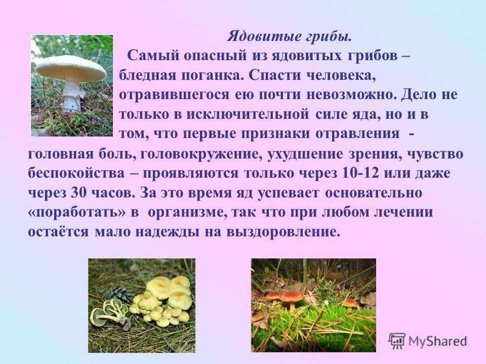 Ядовитые грибы. Самый опасный из ядовитых грибов – бледная поганка. Спасти человека, отравившегося ею почти невозможно. Дело не только в исключительной силе яда, но и в том, что первые признаки отравления - головная боль, головокружение, ухудшение зр