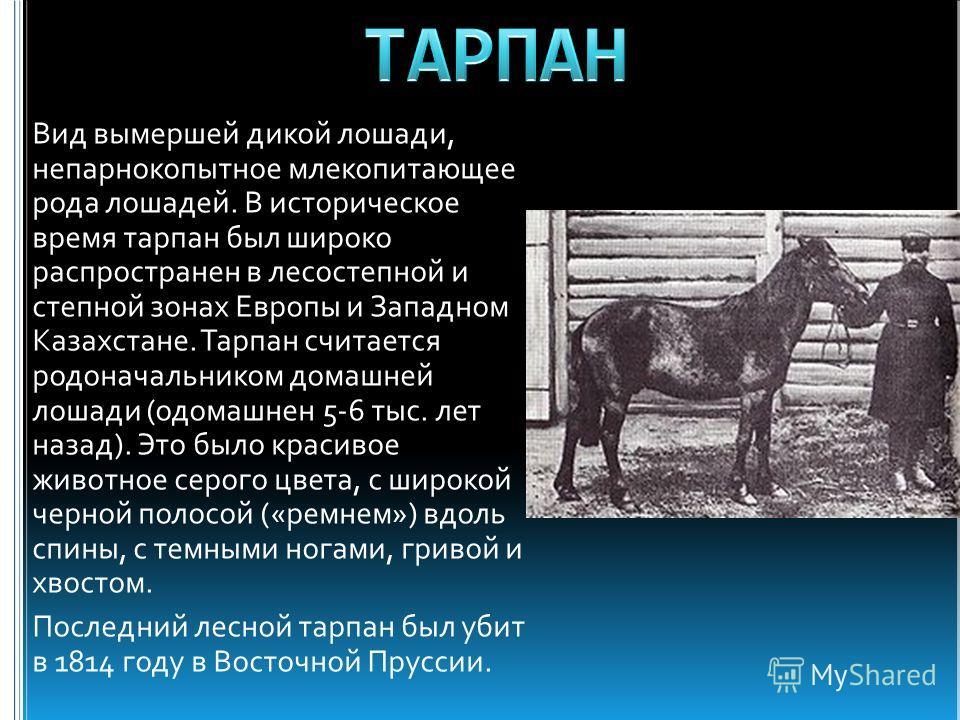 Вид вымершей дикой лошади, непарнокопытное млекопитающее рода лошадей. В историческое время тарпан был широко распространен в лесостепной и степной зонах Европы и Западном Казахстане. Тарпан считается родоначальником домашней лошади (одомашнен 5-6 ты