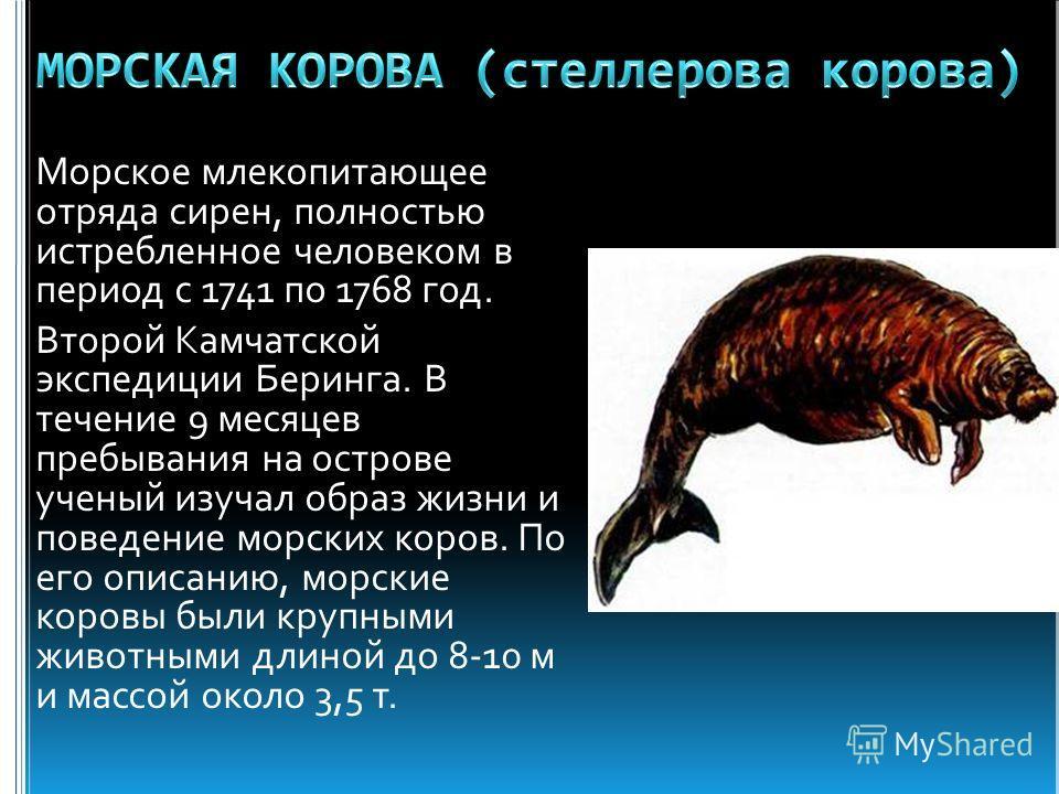 Морское млекопитающее отряда сирен, полностью истребленное человеком в период с 1741 по 1768 год. Второй Камчатской экспедиции Беринга. В течение 9 месяцев пребывания на острове ученый изучал образ жизни и поведение морских коров. По его описанию, мо