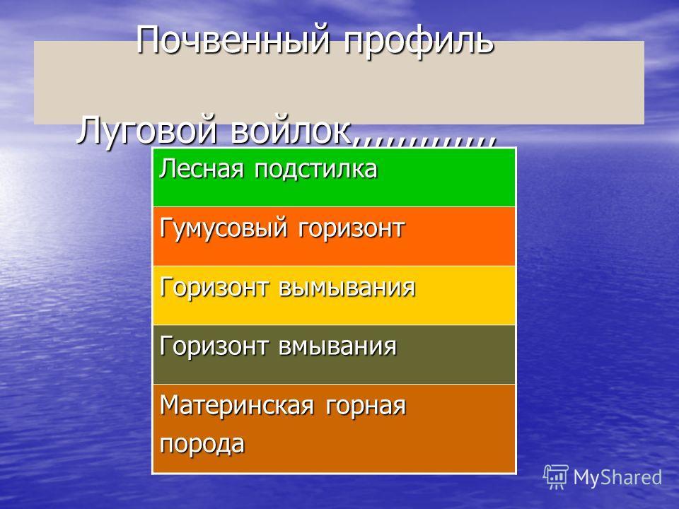 Презентация Климат России