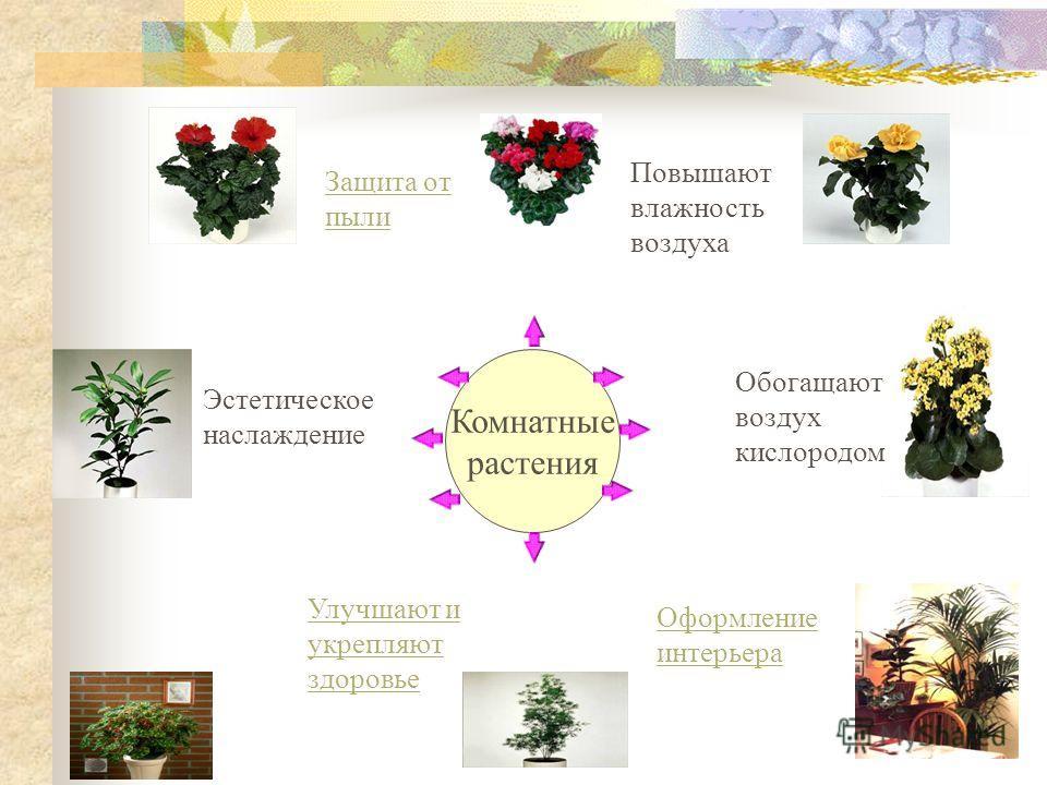 Комнатные растения Комнатные растения Защита от пыли Повышают влажность воздуха Обогащают воздух кислородом Оформление интерьера Улучшают и укрепляют здоровье Эстетическое наслаждение