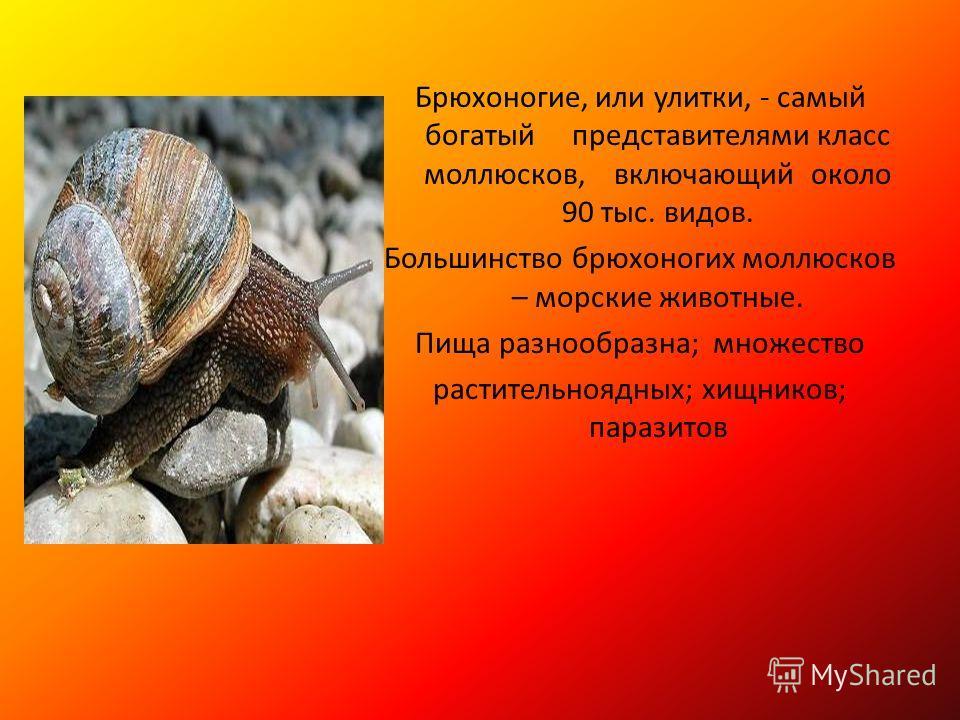 Брюхоногие, или улитки, - самый богатый представителями класс моллюсков, включающий около 90 тыс. видов. Большинство брюхоногих моллюсков – морские животные. Пища разнообразна; множество растительноядных; хищников; паразитов