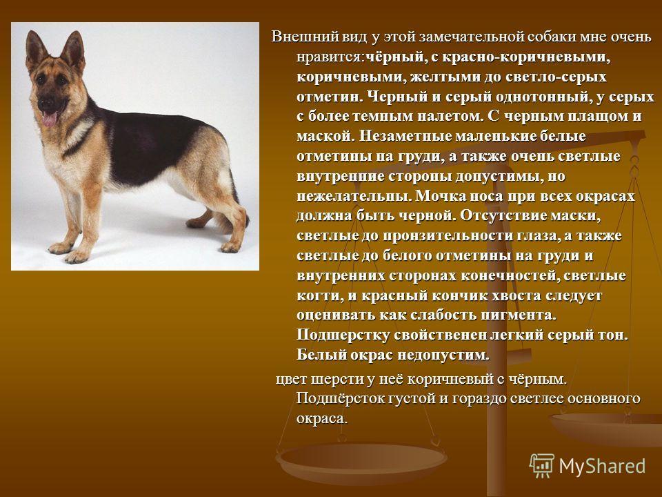 Внешний вид у этой замечательной собаки мне очень нравится:чёрный, с красно-коричневыми, коричневыми, желтыми до светло-серых отметин. Черный и серый однотонный, у серых с более темным налетом. С черным плащом и маской. Незаметные маленькие белые отм