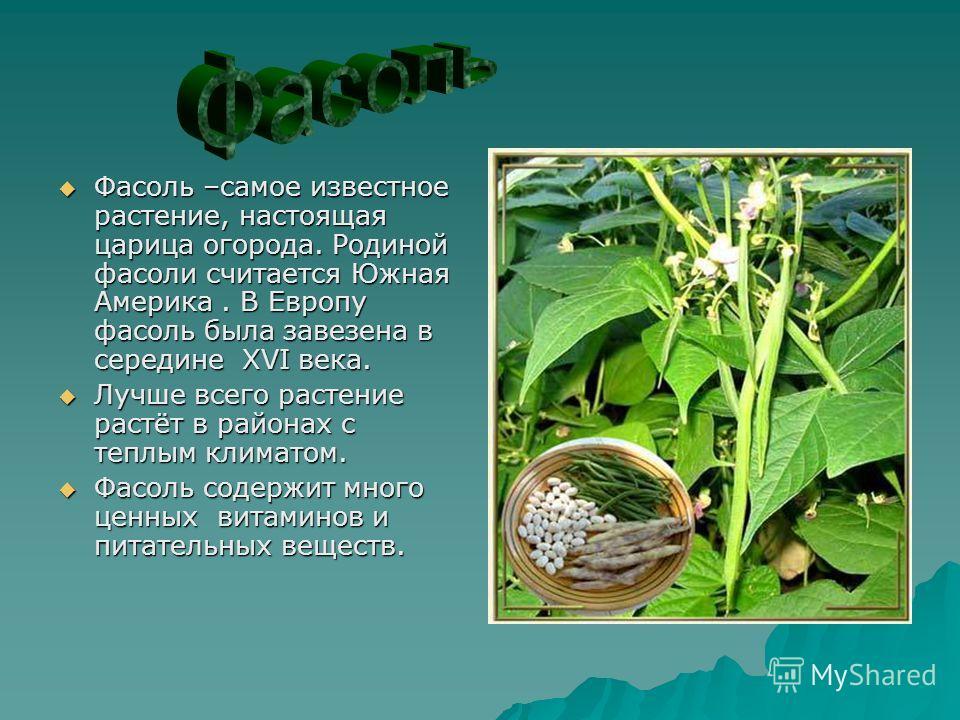 Фасоль –самое известное растение, настоящая царица огорода. Родиной фасоли считается Южная Америка. В Европу фасоль была завезена в середине XVI века. Фасоль –самое известное растение, настоящая царица огорода. Родиной фасоли считается Южная Америка.