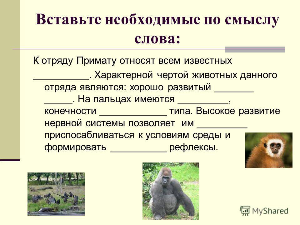 Вставьте необходимые по смыслу слова: К отряду Примату относят всем известных __________. Характерной чертой животных данного отряда являются: хорошо развитый _______ _____. На пальцах имеются _________, конечности ____________ типа. Высокое развитие