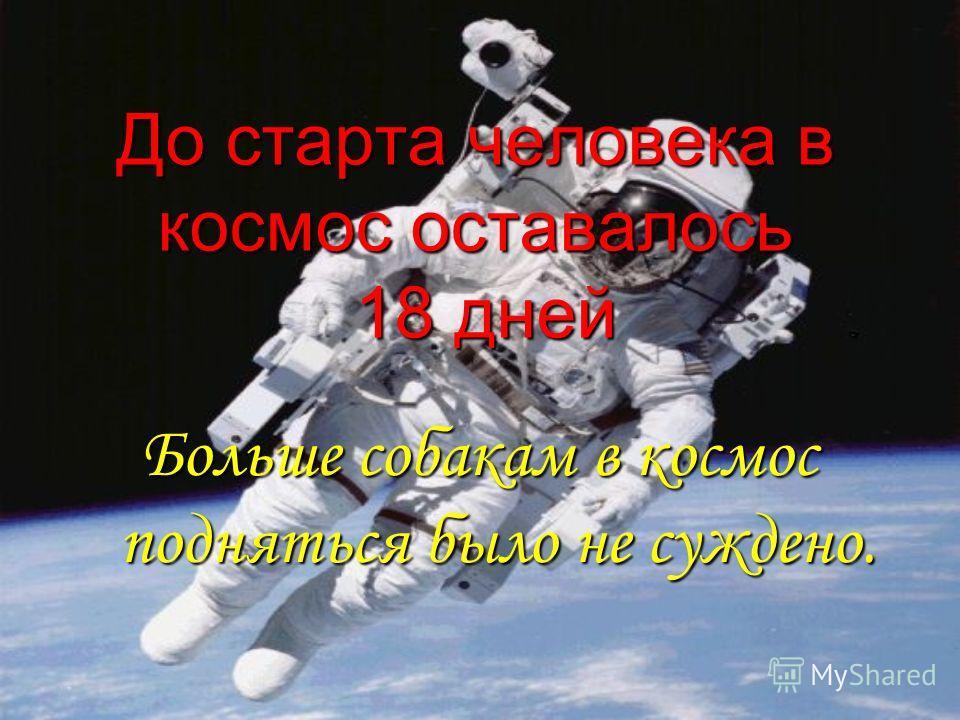 До старта человека в космос оставалось 18 дней Больше собакам в космос подняться было не суждено.