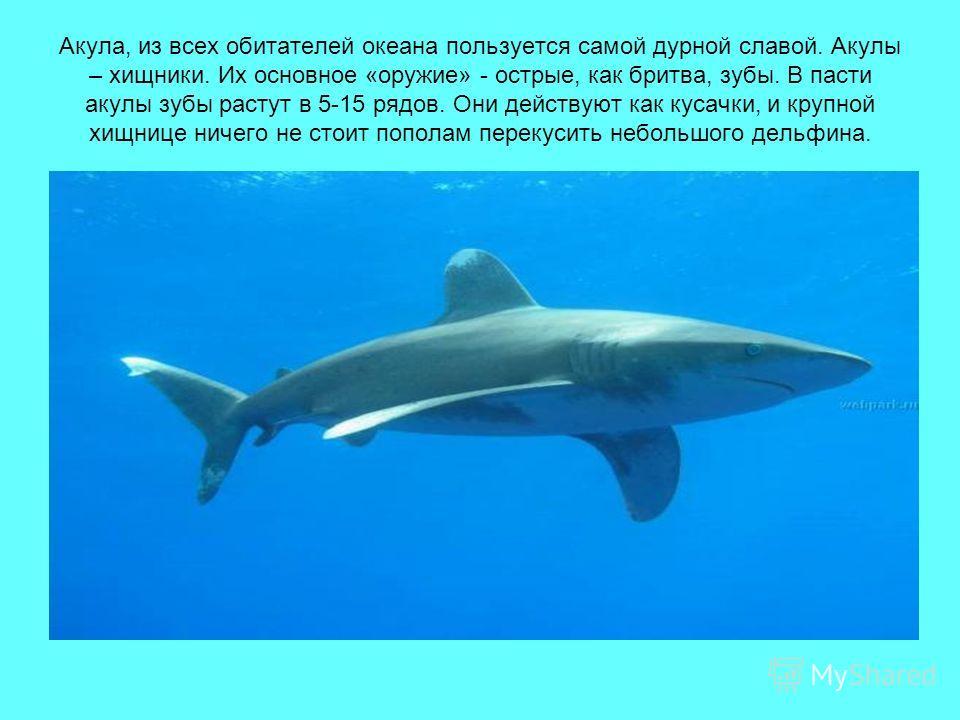 Акула, из всех обитателей океана пользуется самой дурной славой. Акулы – хищники. Их основное «оружие» - острые, как бритва, зубы. В пасти акулы зубы растут в 5-15 рядов. Они действуют как кусачки, и крупной хищнице ничего не стоит пополам перекусить