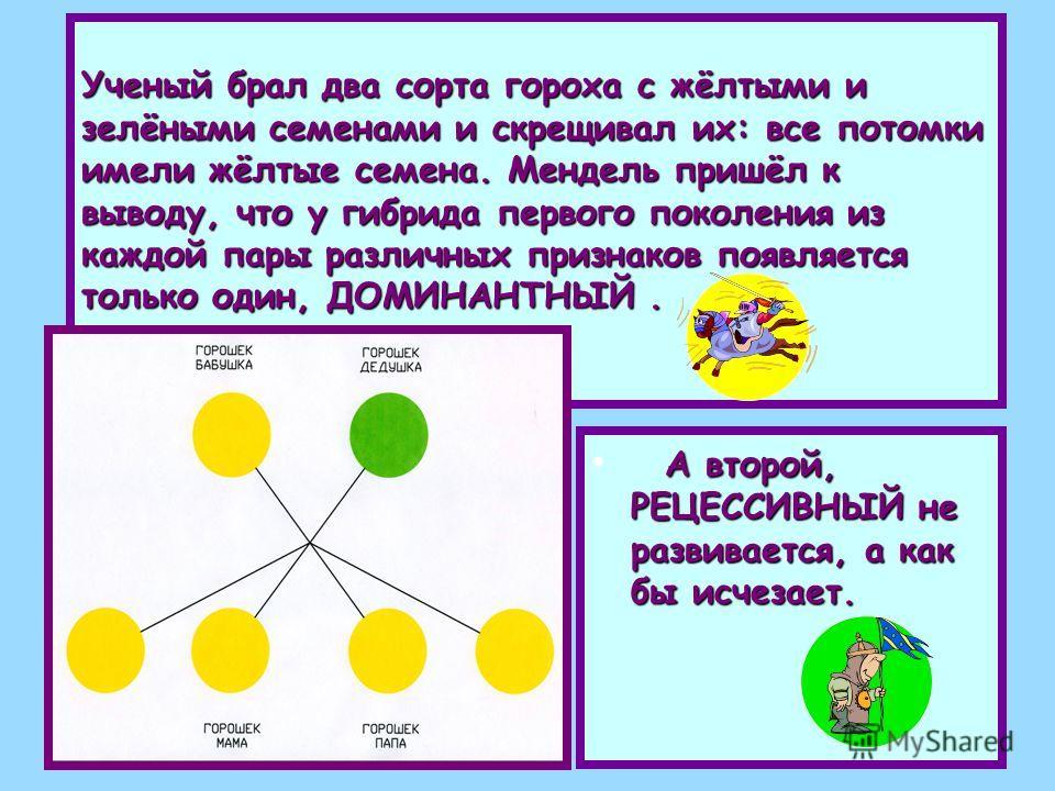 Ученый брал два сорта гороха с жёлтыми и зелёными семенами и скрещивал их: все потомки имели жёлтые семена. Мендель пришёл к выводу, что у гибрида первого поколения из каждой пары различных признаков появляется только один, ДОМИНАНТНЫЙ. А второй, РЕЦ