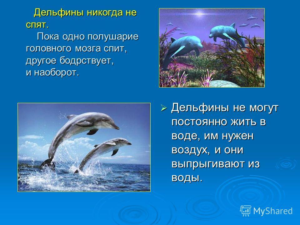 Дельфины никогда не спят. Пока одно полушарие головного мозга спит, другое бодрствует, и наоборот. Дельфины никогда не спят. Пока одно полушарие головного мозга спит, другое бодрствует, и наоборот. Дельфины не могут постоянно жить в воде, им нужен во