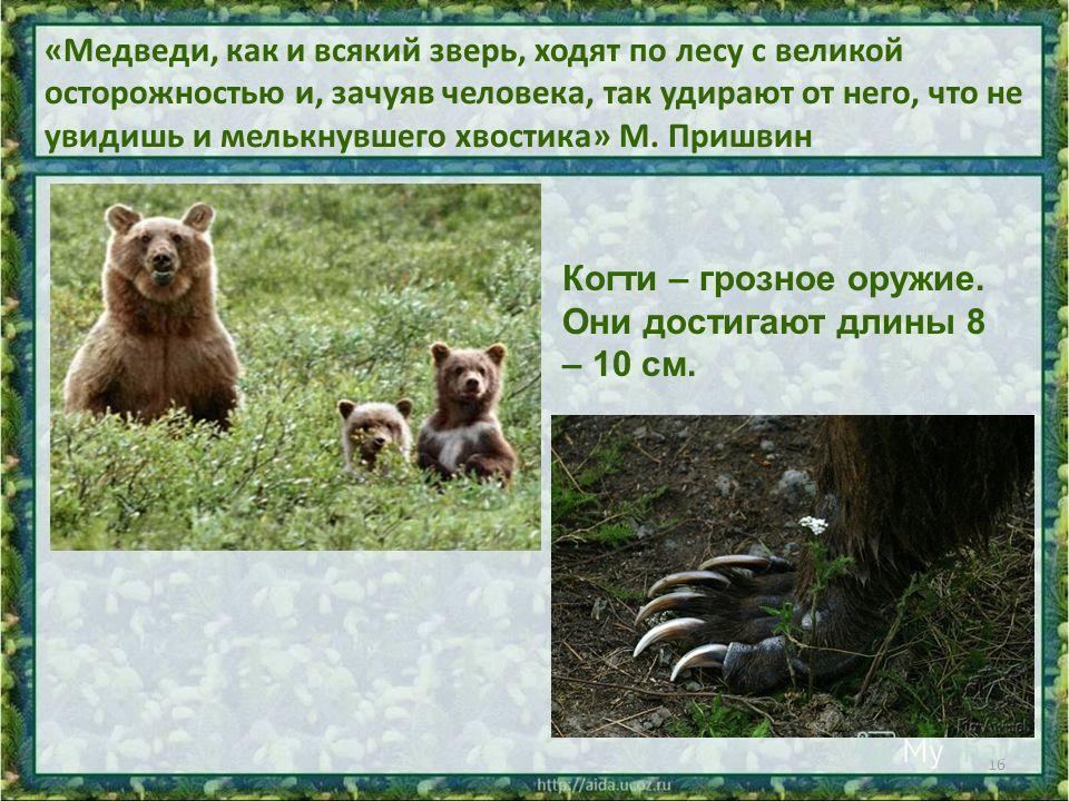 «Медведи, как и всякий зверь, ходят по лесу с великой осторожностью и, зачуяв человека, так удирают от него, что не увидишь и мелькнувшего хвостика» М. Пришвин 16 Когти – грозное оружие. Они достигают длины 8 – 10 см.