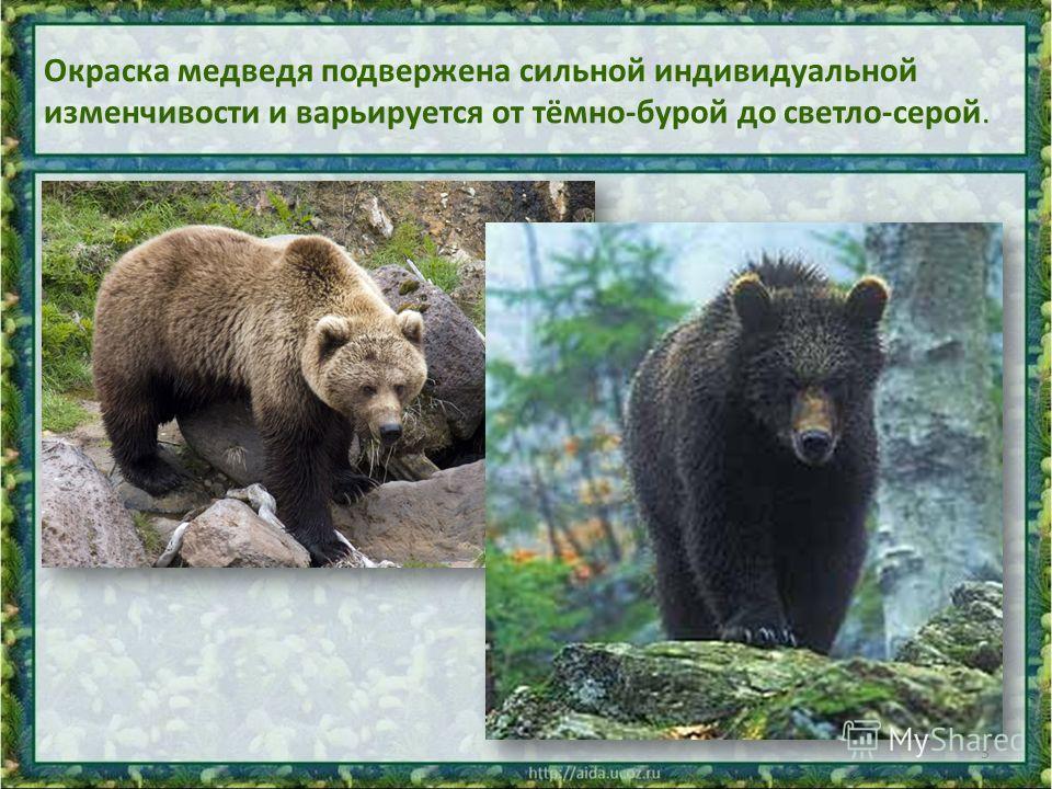 Окраска медведя подвержена сильной индивидуальной изменчивости и варьируется от тёмно-бурой до светло-серой. 3