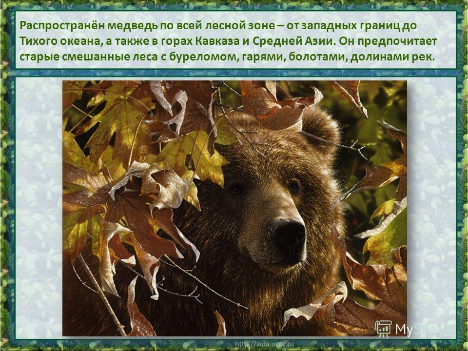 Распространён медведь по всей лесной зоне – от западных границ до Тихого океана, а также в горах Кавказа и Средней Азии. Он предпочитает старые смешанные леса с буреломом, гарями, болотами, долинами рек. 4