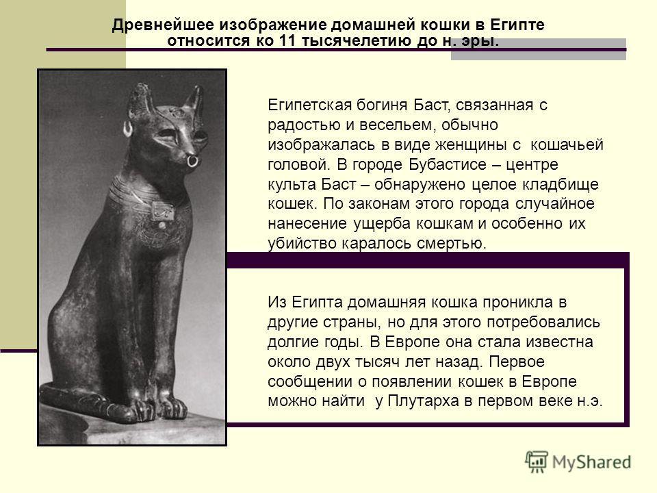 Древнейшее изображение домашней кошки в Египте относится ко 11 тысячелетию до н. эры. Египетская богиня Баст, связанная с радостью и весельем, обычно изображалась в виде женщины с кошачьей головой. В городе Бубастисе – центре культа Баст – обнаружено