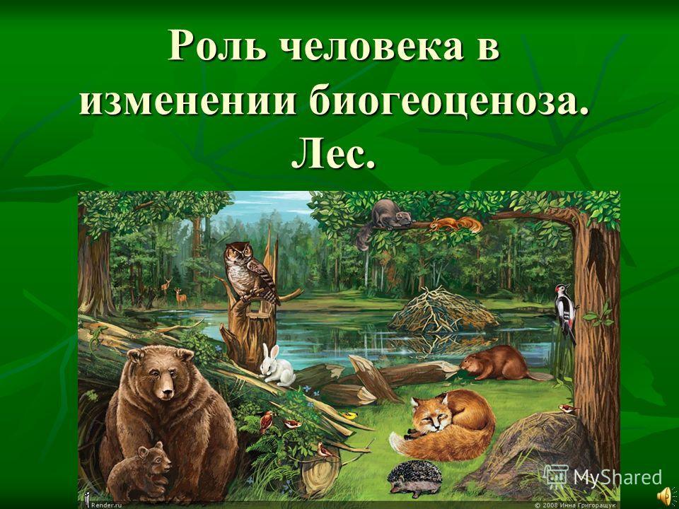 Роль человека в изменении биогеоценоза. Лес. Роль человека в изменении биогеоценоза. Лес.